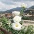S.Messa in ricordo dei defunti del crollo di Ponte Morandi